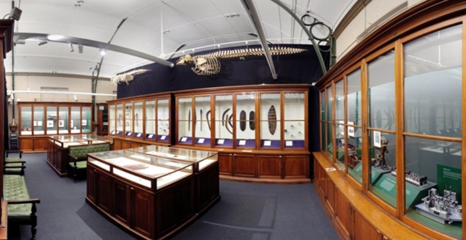 Macleay Museum(考古学)