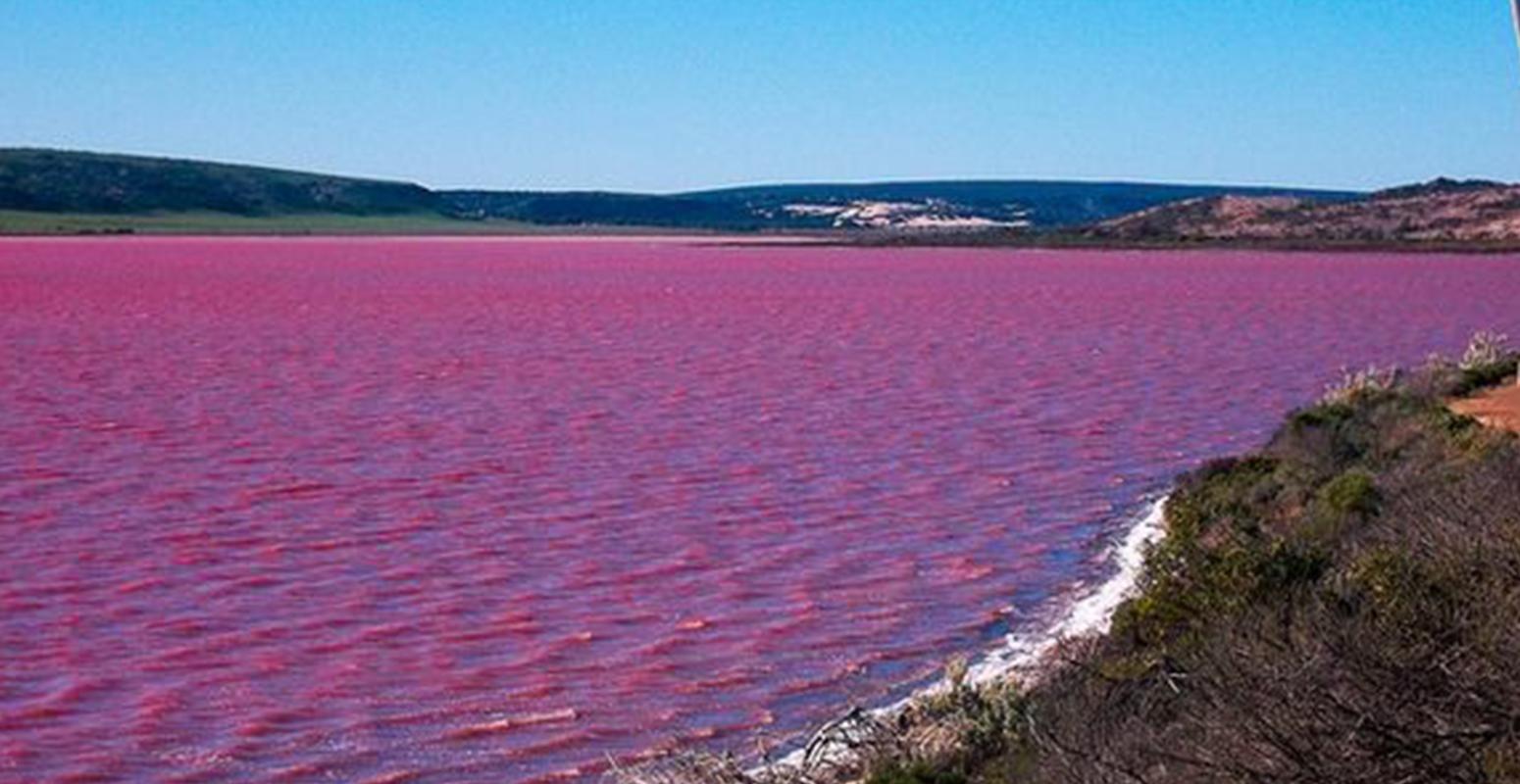湖 ピンク色 理由