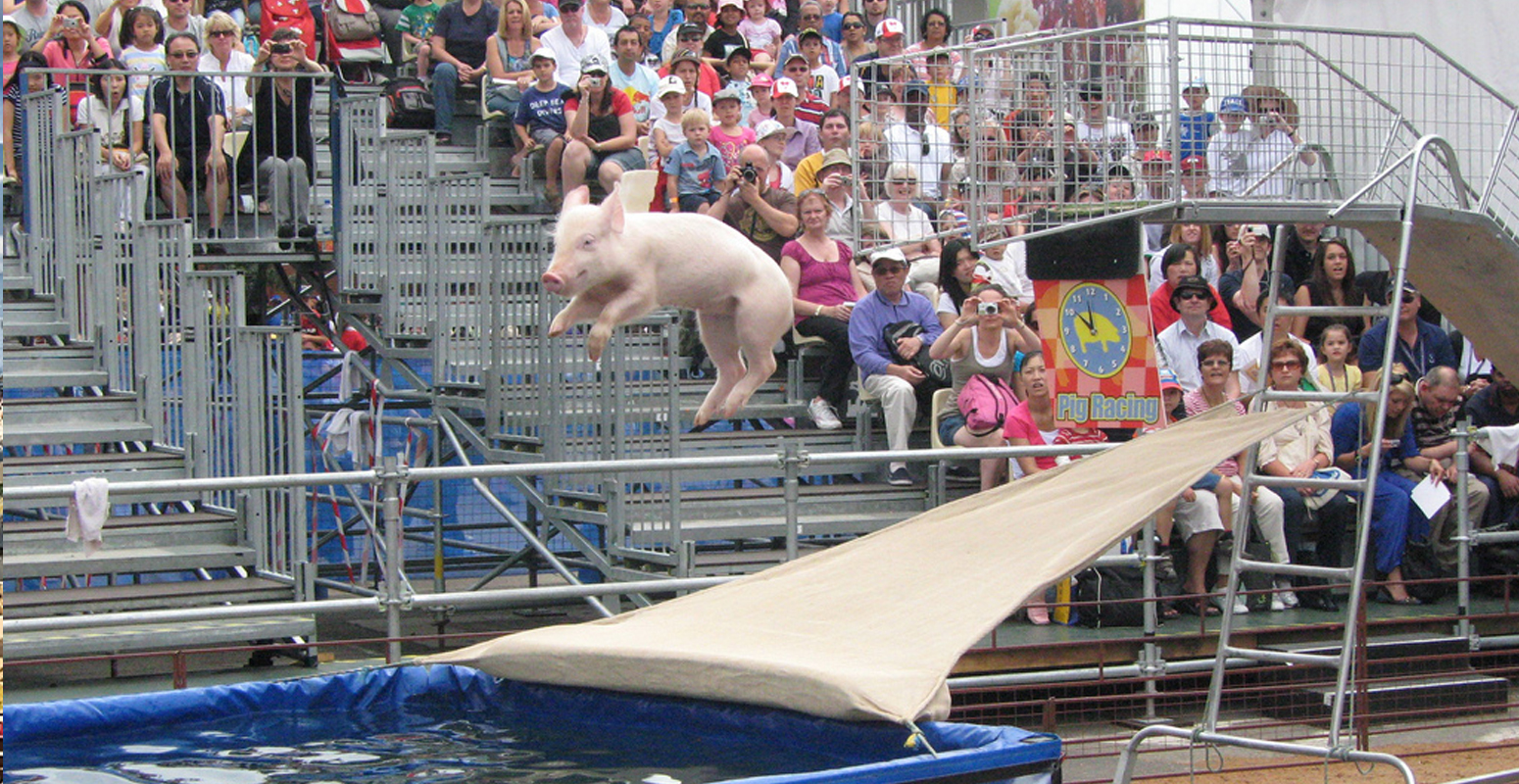 豚 ジャンプ