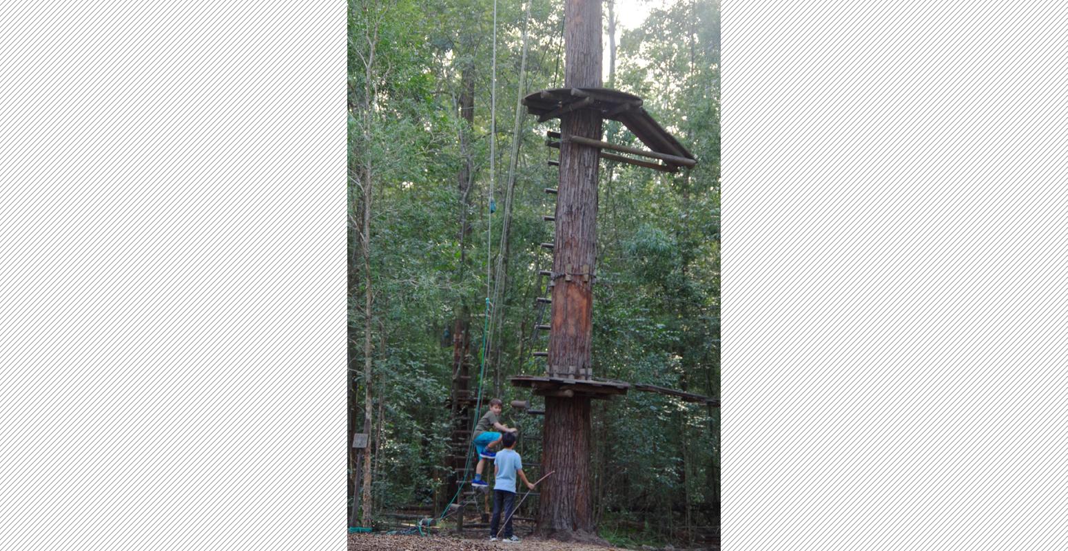 木登り アスレチック 自然
