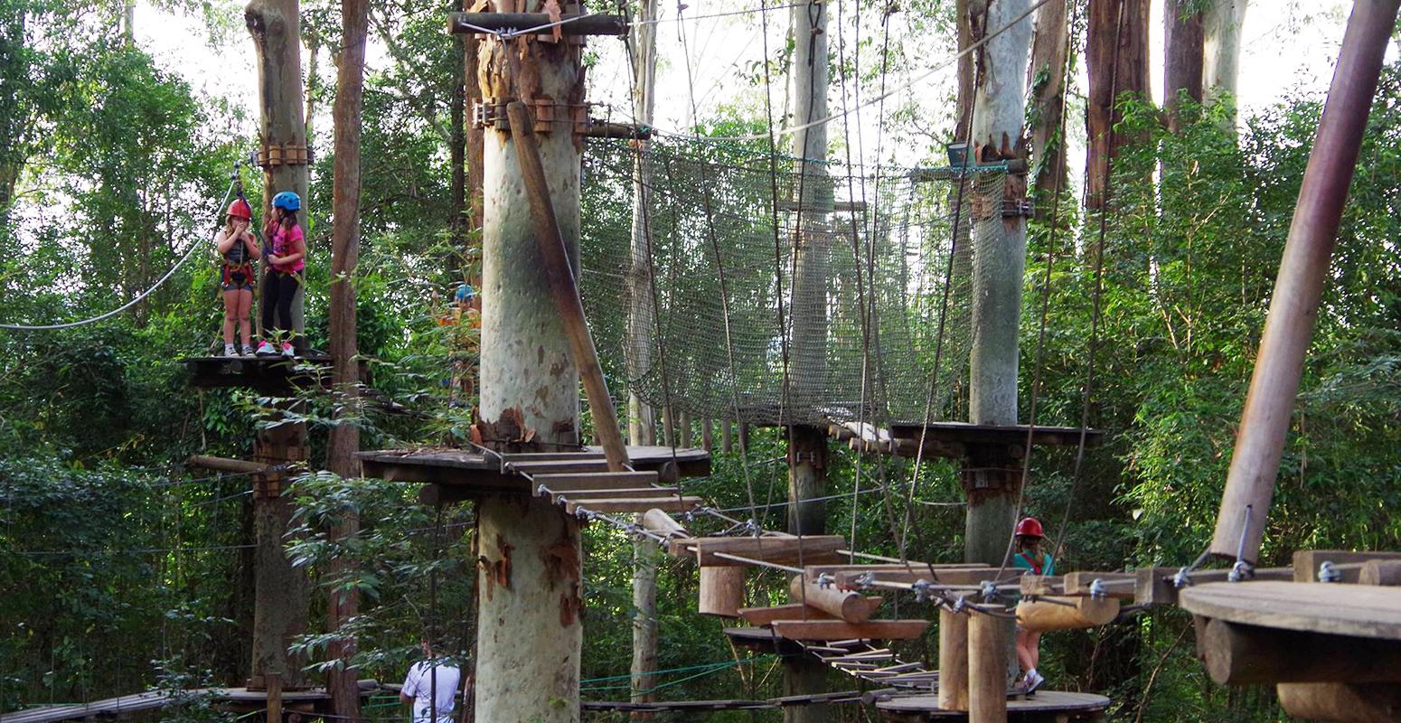 アスレチック 森 木 遊び場