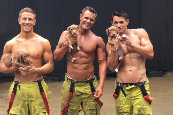 カレンダー 消防士 動物