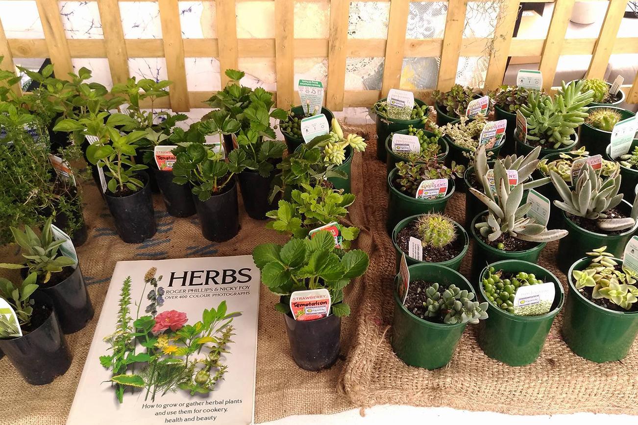 鉢植えのショップマーケット