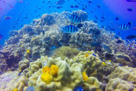 グレートバリアリーフのサンゴ礁