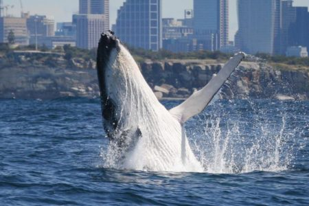 年に1度!クジラが見られるシーズン