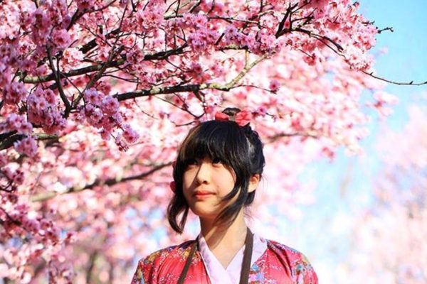 シドニーの桜が満開